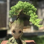 Bonsai 101 (Everything You Need to Get Started)